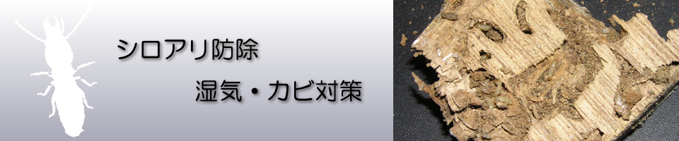 白蟻(しろあり)イメージ画像